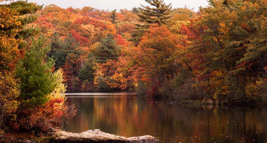 Encouraging you to go leaf peeping on near a river.