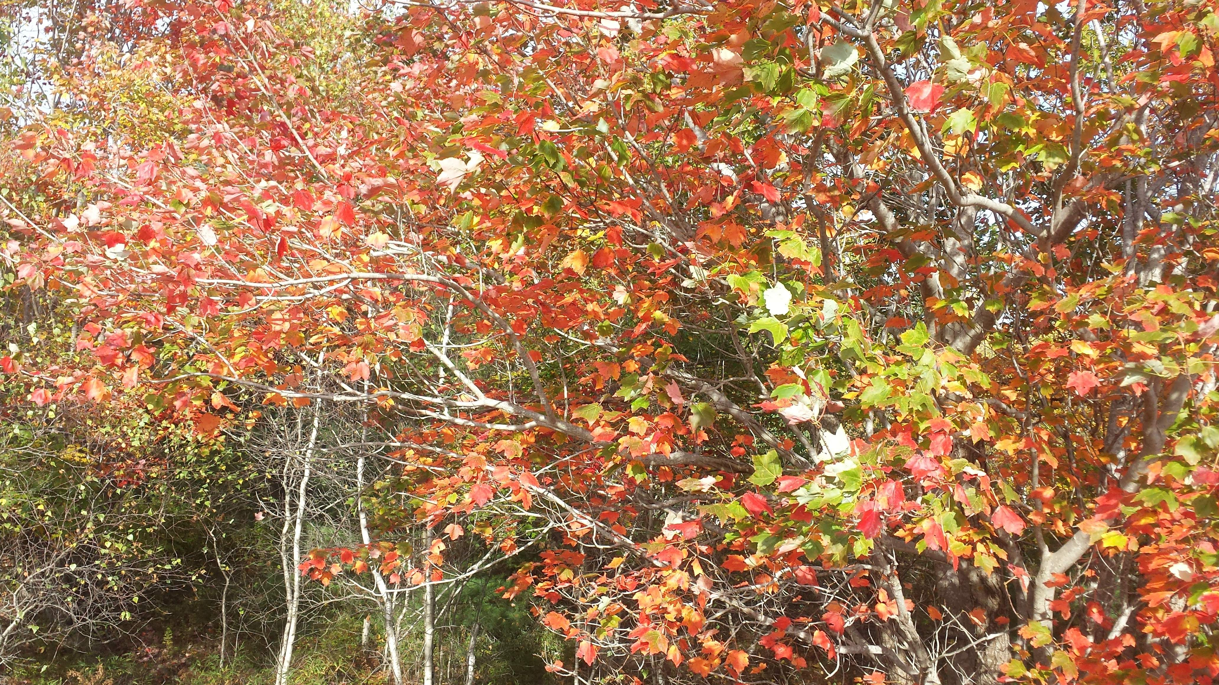 our leaf peeping trip