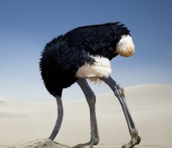 Encouraging you to be like an ostrich on near a river.